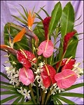 Mixed Tropical Gift Box